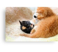 Play fighting kittens Canvas Print