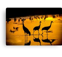 Common crane (Grus grus) Silhouetted at sun-set Canvas Print