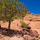 USA. Arizona. Canyon de Chelly National Monument. Lonely Tree. by vadim19