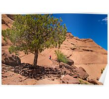 USA. Arizona. Canyon de Chelly National Monument. Lonely Tree. Poster