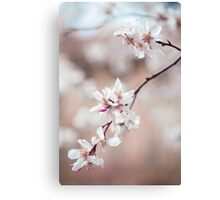 Spring Cherry Delight Canvas Print