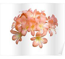 Peach Coloured Lilium Flowers Poster