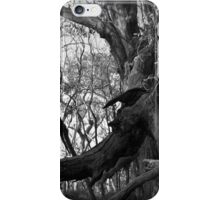 Scary Tree- Chinaman's Track iPhone Case/Skin