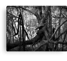 Scary Tree- Chinaman's Track Canvas Print