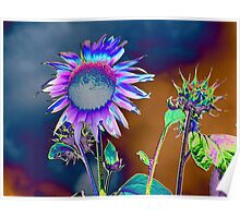 Stormy And Sun Shiney Day, By Barbara Kite Poster