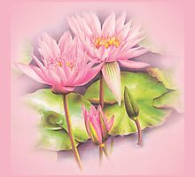 Water lily - nymphaeaceae by Sarah Trett