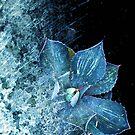 A splash of blue by Susan Ringler