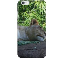 Sleeping Lioness iPhone Case/Skin