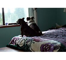 Ripley & Basil On The Bed Photographic Print