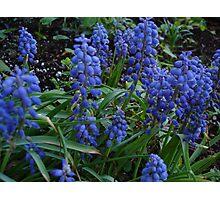 Hyacinth Bunch Photographic Print