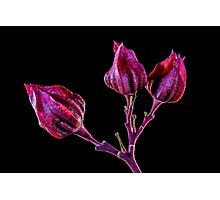 Life is Purple Photographic Print