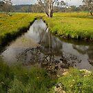 Styx River - NSW Australia by Barbara Burkhardt