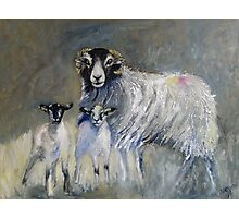 Swaledale Family Photographic Print