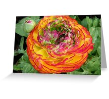 Orange and Red .. Shades of a flower Greeting Card