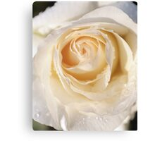 Yellow rose close-up Canvas Print