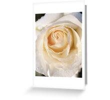 Yellow rose close-up Greeting Card