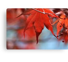 leader in red Canvas Print