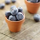 Blueberries potty in a country style by Aviana