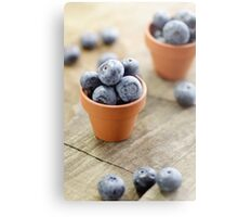 Blueberries potty in a country style Metal Print
