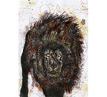 Scribble Ink Lion Photographic Print
