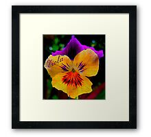 Viola Yellow Framed Print