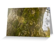 Mossy Tree with Sun Flare Greeting Card