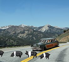You just can't avoid them!  Even in the mountains Dick encounters road hogs! by Susan Littlefield