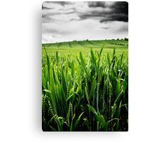 Wheat Landscape Canvas Print