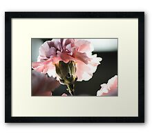 Precious Life in Pink Framed Print