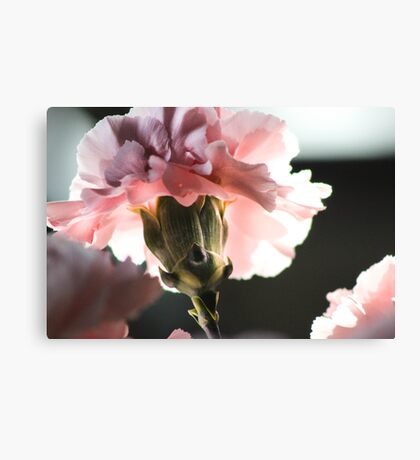 Precious Life in Pink Canvas Print