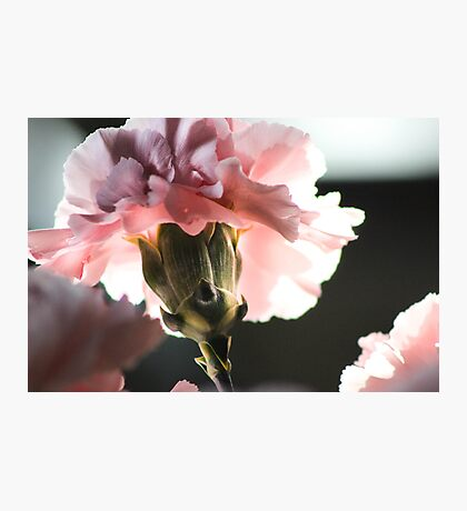 Precious Life in Pink Photographic Print