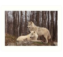 The Arctic Wolf Pair in fall Art Print