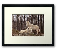 The Arctic Wolf Pair in fall Framed Print
