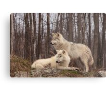 The Arctic Wolf Pair in fall Metal Print