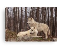 The Arctic Wolf Pair in fall Canvas Print