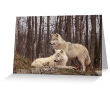 The Arctic Wolf Pair in fall Greeting Card