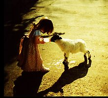 Lambs by Ingrid  Sloss Demazeux