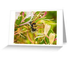 Bumble bee on honeysuckle Greeting Card