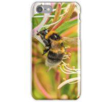Bumble bee on honeysuckle iPhone Case/Skin