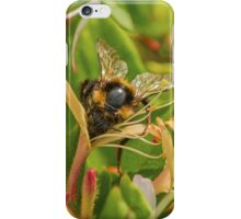 Bumble bee on honeysuckle again iPhone Case/Skin