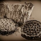 Floating Lotus Seed Pods1 by mcstory