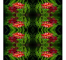Flowers of red Photographic Print
