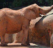 Happy Baby Elephant by Scott Mitchell