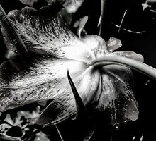 the caressed blossom by BBrightman