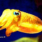 Ocean Creatures: Cuttle Fish by Bunny Clarke