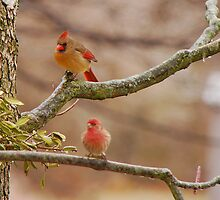 Out On A Limb by Mary Carol Story