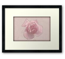 Pink English rose as seen from above  Framed Print