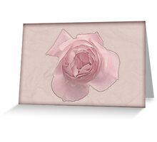 Pink English rose as seen from above  Greeting Card