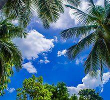 The Palm Sky Blue by Charman69