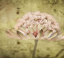Out of this world flower by Kerry McQuaid